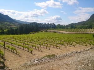 Vignoble Terrasses du Larzac